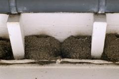 Dix nids: détail